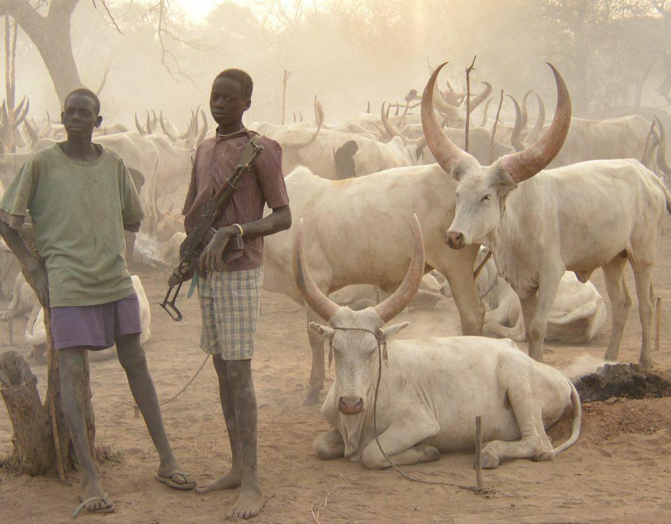 Mladí pastieri dobytka si chránia svoje stáda.