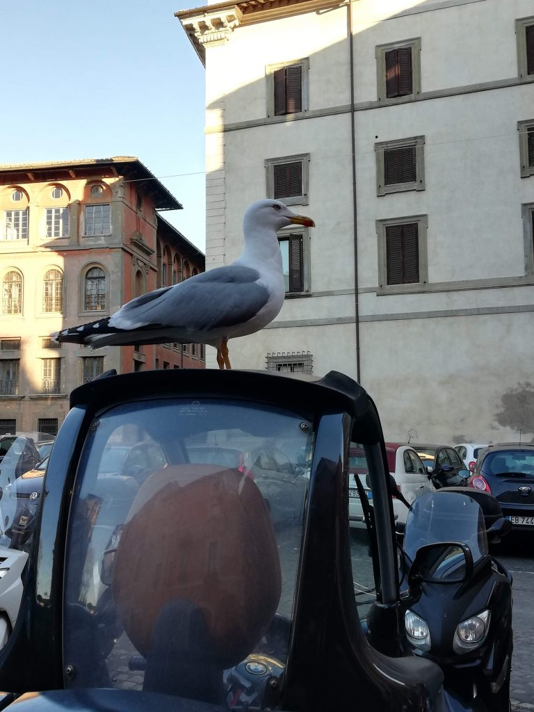 Kolednici v Rime